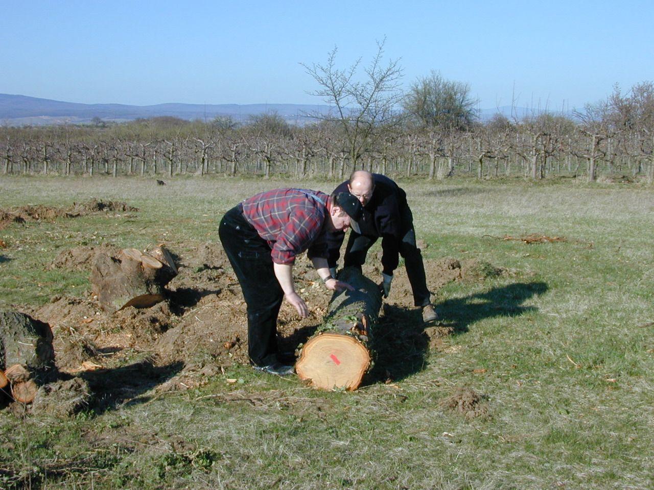 Kirschbaumstamm bereit zum Abtransport